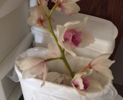 もう終わりかけの蘭の花、ゴミ箱に。。